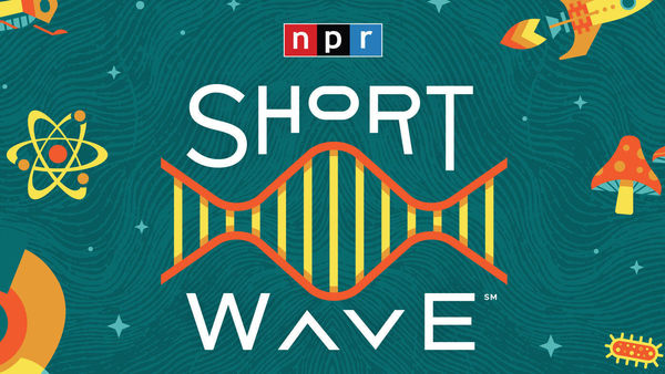 NDIAS Fellow Mutale Nkonde Featured on NPR Podcast